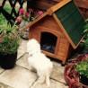 Cuccia per cani di piccola taglia in legno da esterno