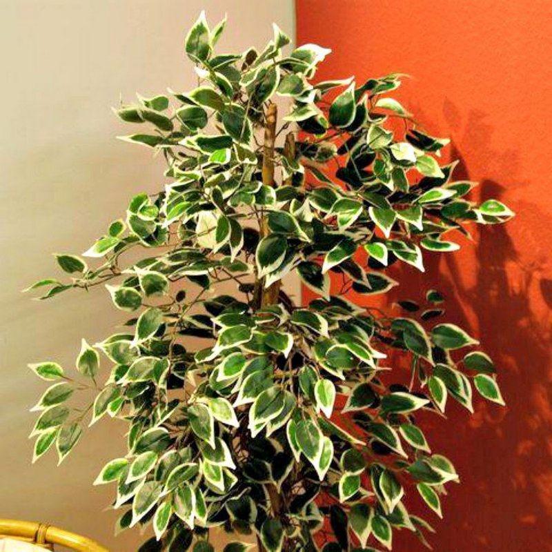 Piante finte artificiali da arredo interno: Ficus Benjamin ...