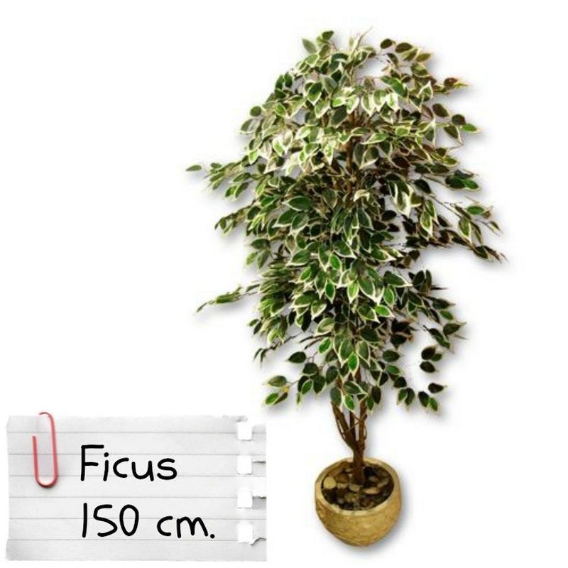 Piante Finte Da Appartamento.Piante Finte Artificiali Da Arredo Interno Ficus Benjamin 150 Cm