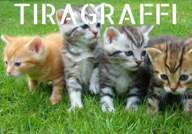 Tiragraffi, cucce e giochi per gatti
